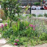 primary school garden